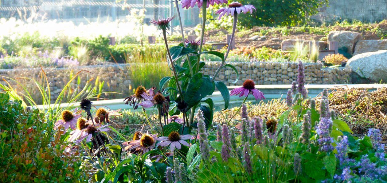Zoom sur un jardin par Petiaut Paysagiste