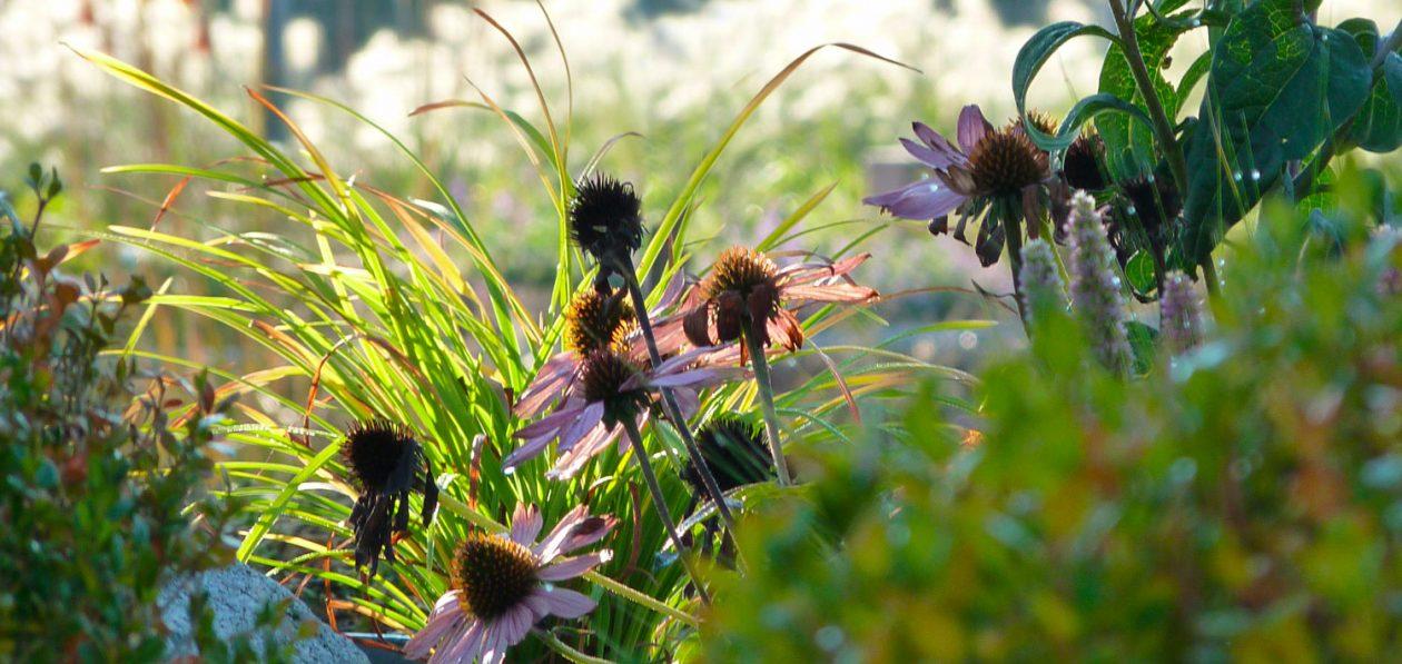 Herbes et fleurs, la végétation dans le jardin